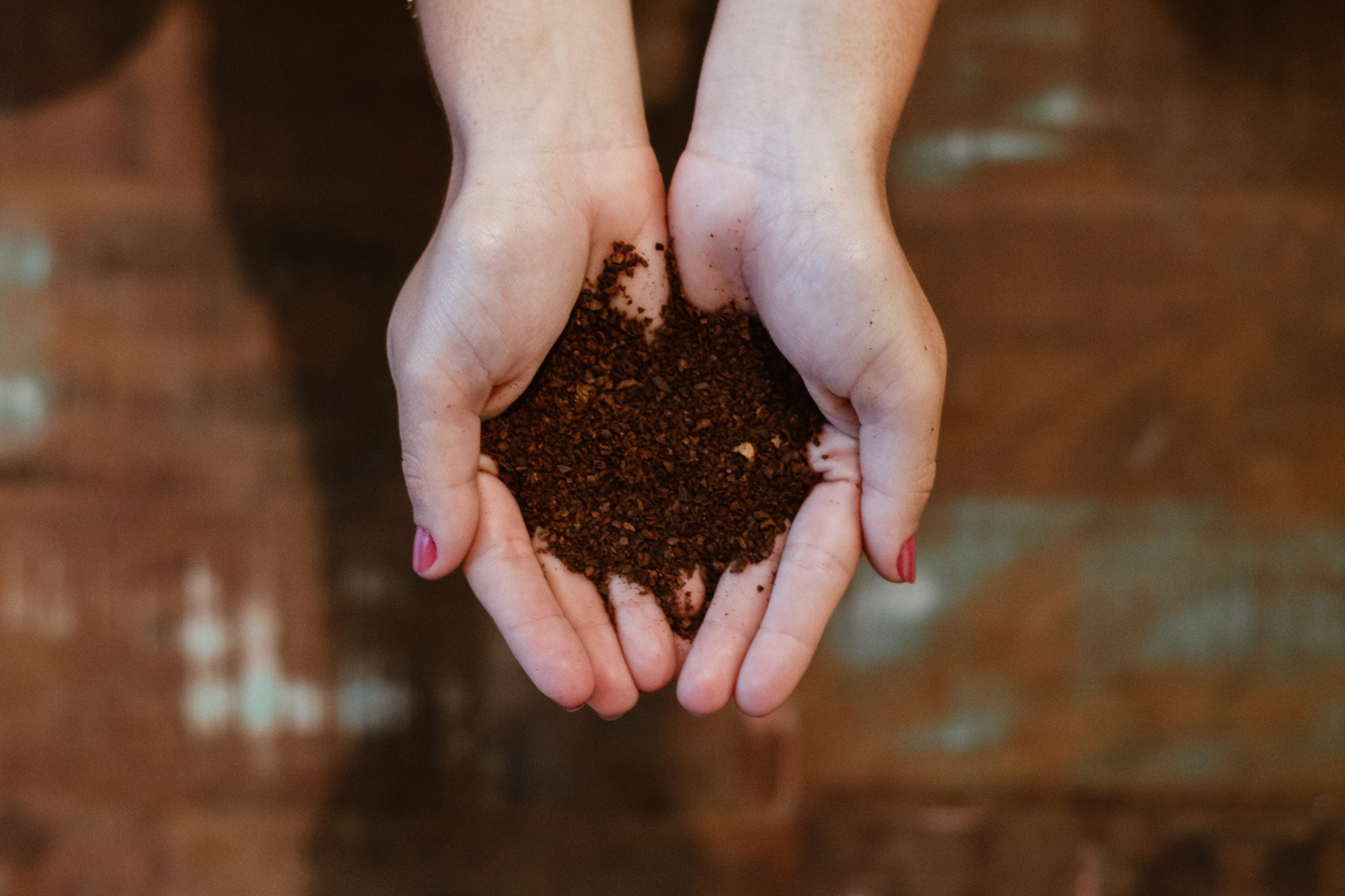 sample of compost being held in hands